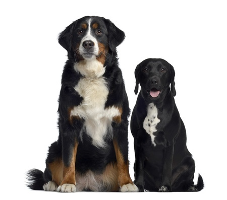 Can You Breed To Dogs That Have The Same Dad